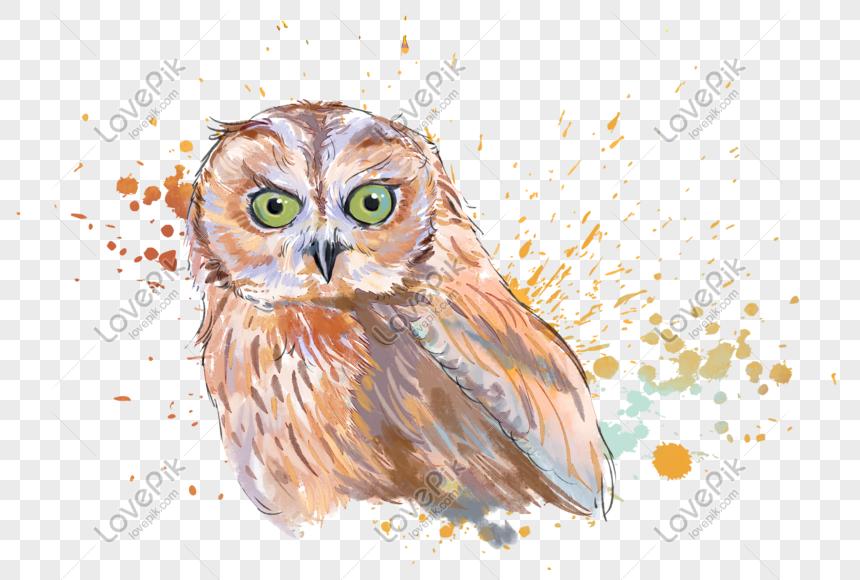 47 Koleksi Wallpaper Burung Hantu Kopi HD