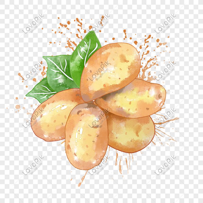 Potato Watercolor Png Image Picture Free Download 401605943 Lovepik Com