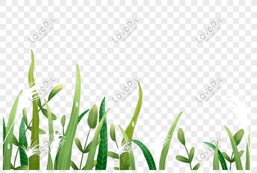 Reed Png Image Picture Free Download 401619616 Lovepik Com