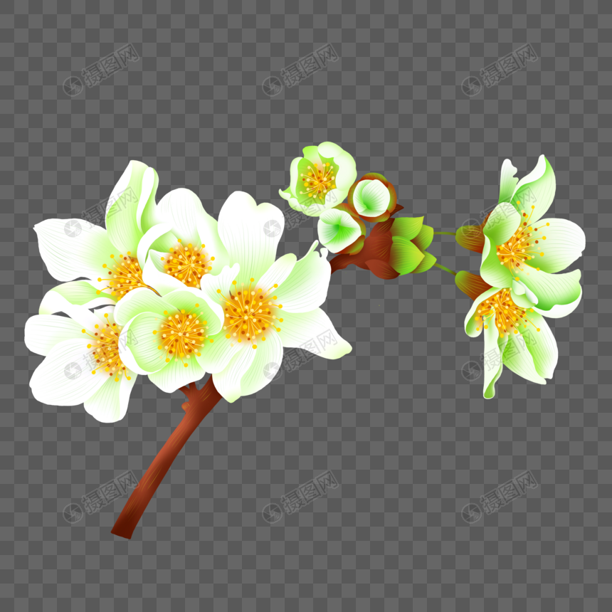 pear flower png