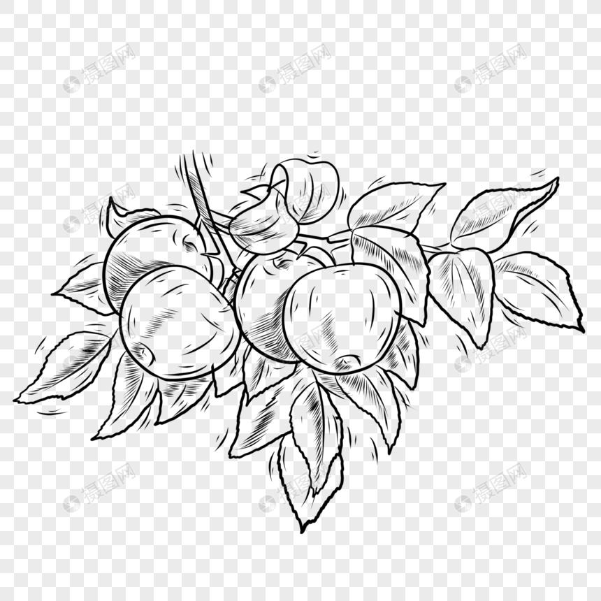 Makanan Buah Buahan Hitam Dan Putih Epal Gambar Unduh Gratis Imej 401693378 Format Psd My Lovepik Com