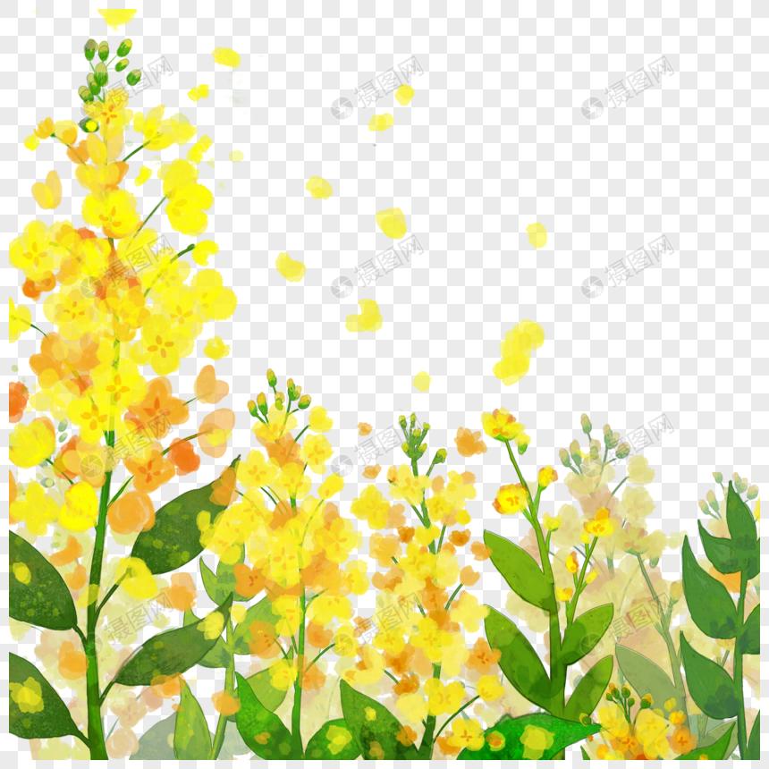 Акварельный цветок канолы png