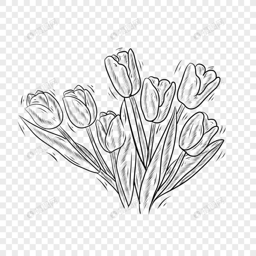 Tulip Bunga Tanaman Garis Hitam Dan Putih Png Grafik Gambar Unduh Gratis Lovepik