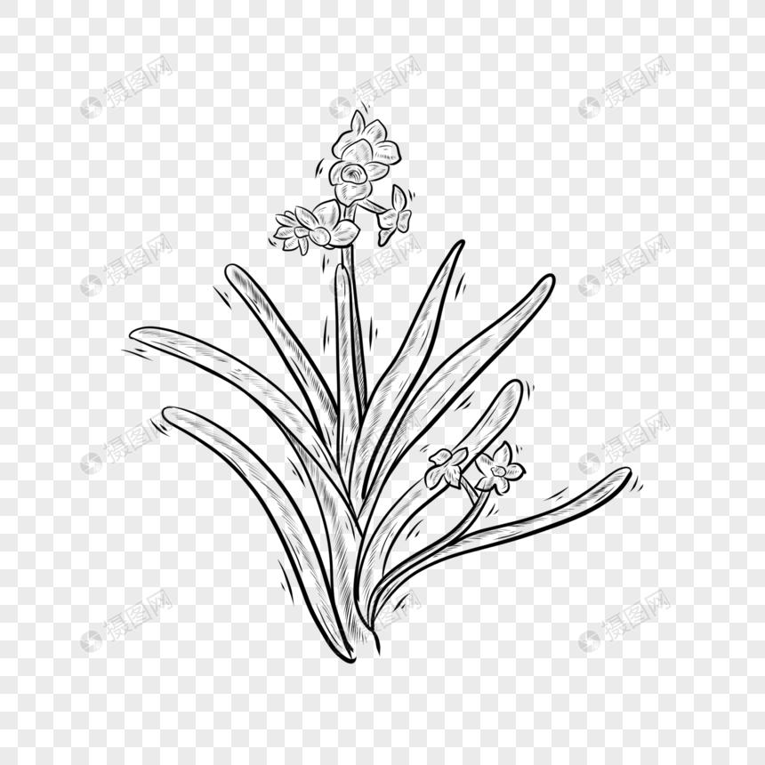 Tanaman Bunga Bakung Hitam Dan Putih Garis Png Grafik Gambar Unduh Gratis Lovepik