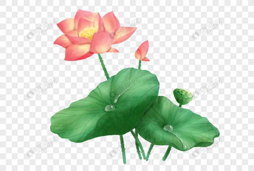 summer lotus lotus leaf lotus png