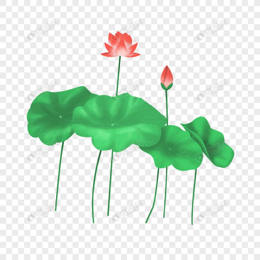 summer lotus png