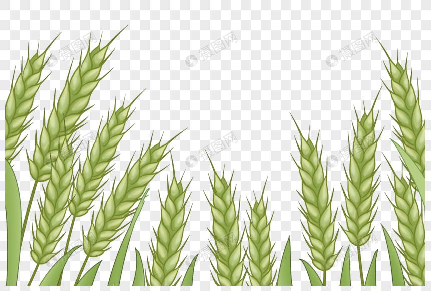 buğday tarlası png