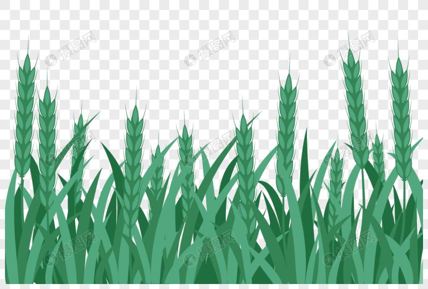 밀밭 png
