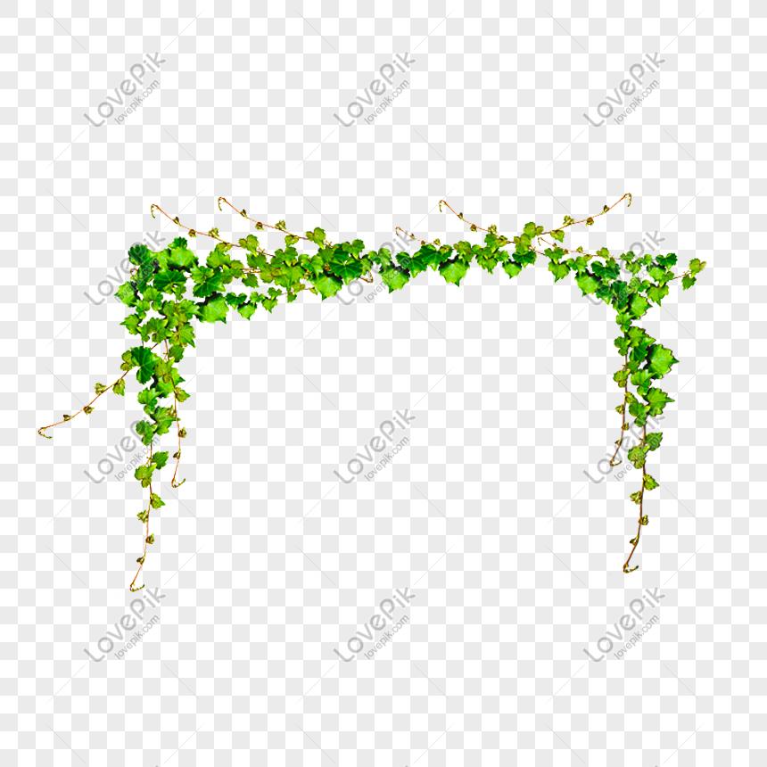 Tanaman Merambat Hijau Di Kebun Png Grafik Gambar Unduh Gratis Lovepik