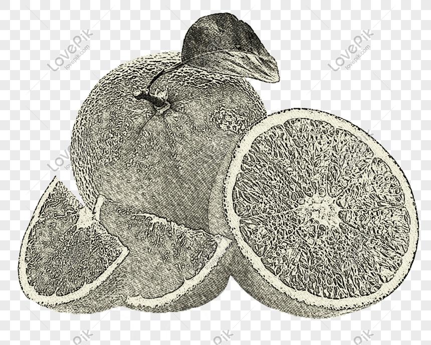 Sketsa Garis Seni Yang Ditarik Tangan Memotong Jeruk Lemon Gambar
