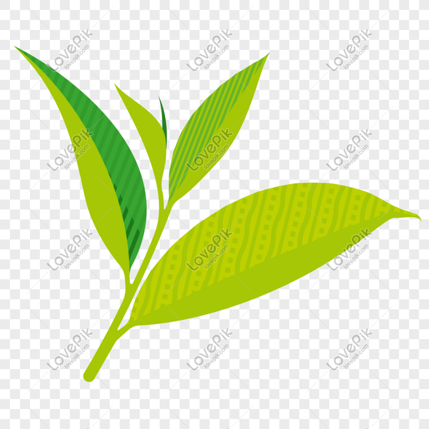 Green Tea Leaves Vector Illustration Png Image Picture Free Download 611644632 Lovepik Com
