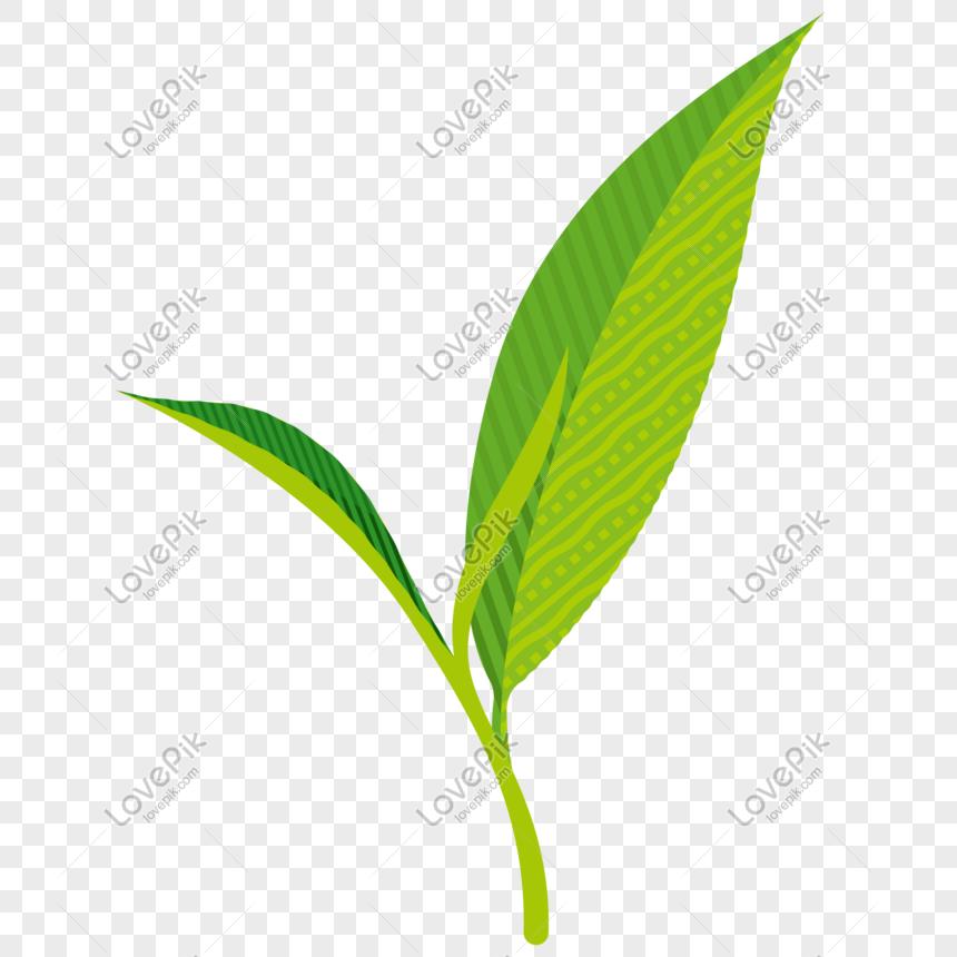 Vector Illustration Of Fresh Tea Leaves Png Image Picture Free Download 611645373 Lovepik Com