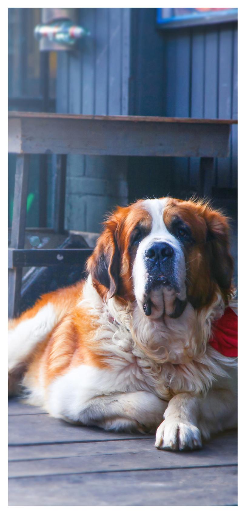 犬の携帯壁紙イメージ 背景 Id 400268364 Prf画像フォーマットjpg Jp