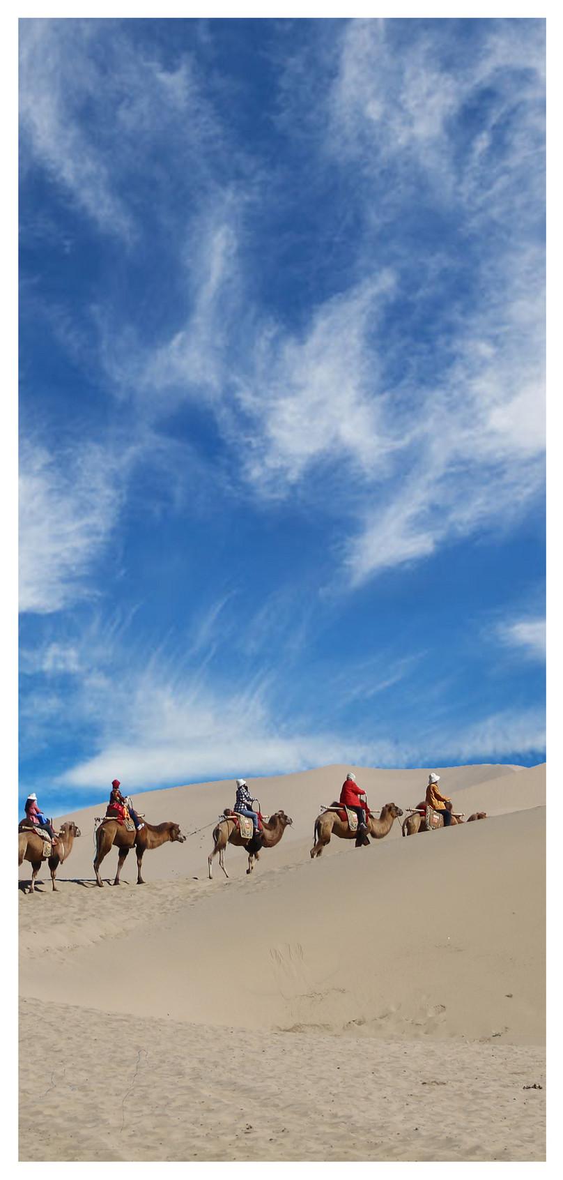 Desert Camel Mobile Phone Wallpaper Backgrounds