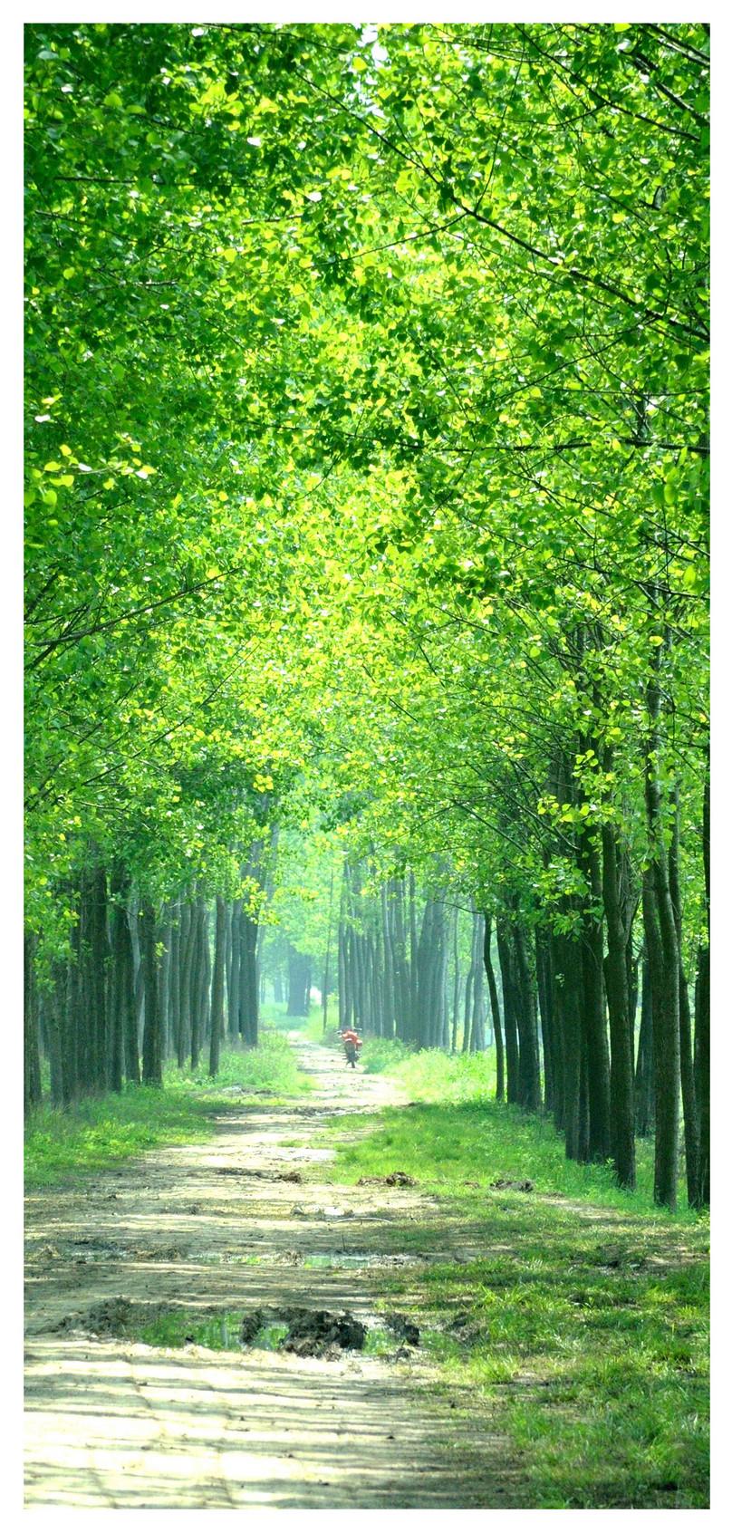 緑の森モバイル壁紙イメージ 背景 Id 400677643 Prf画像フォーマット
