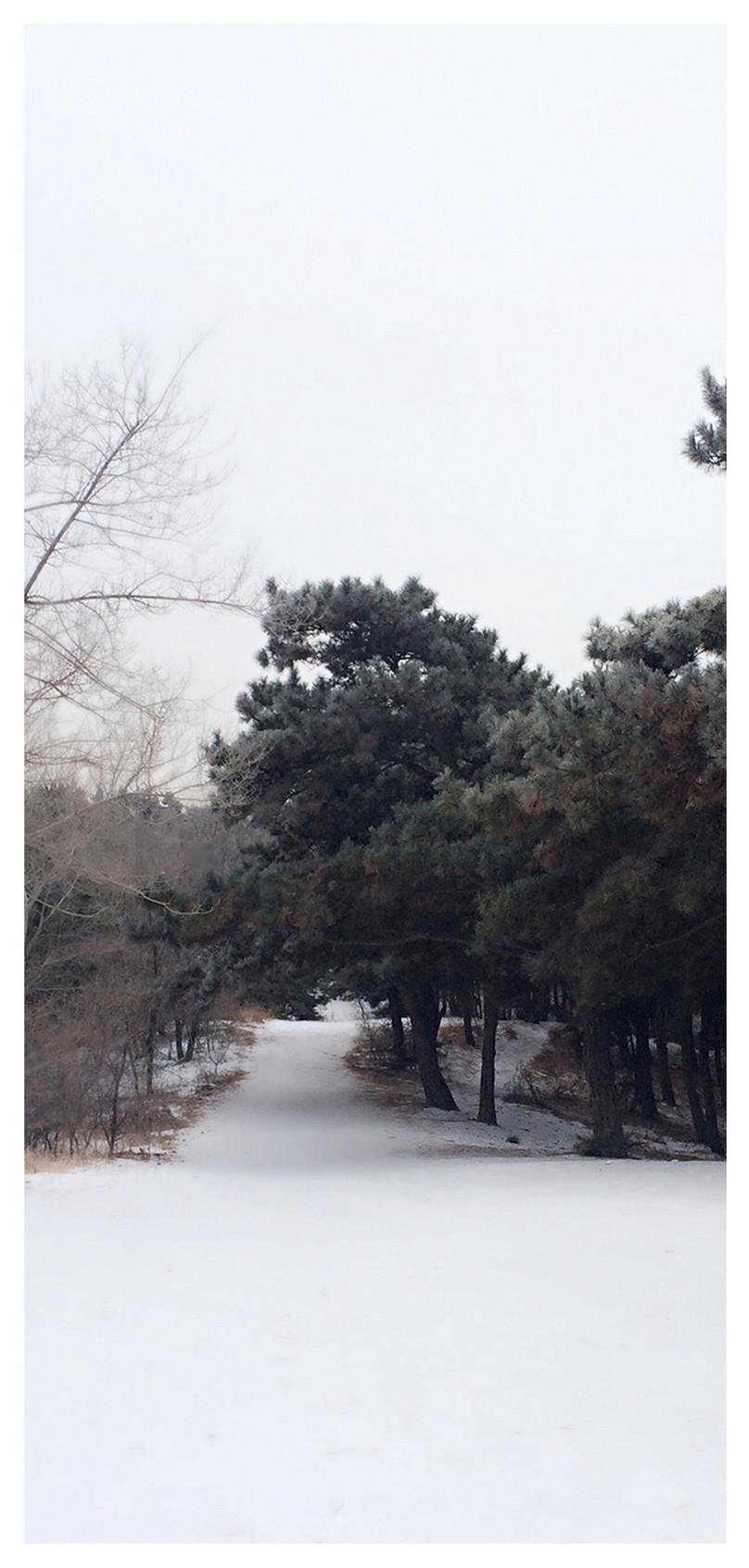 冬の携帯壁紙イメージ 背景 Id 400789988 Prf画像フォーマットjpg Jp