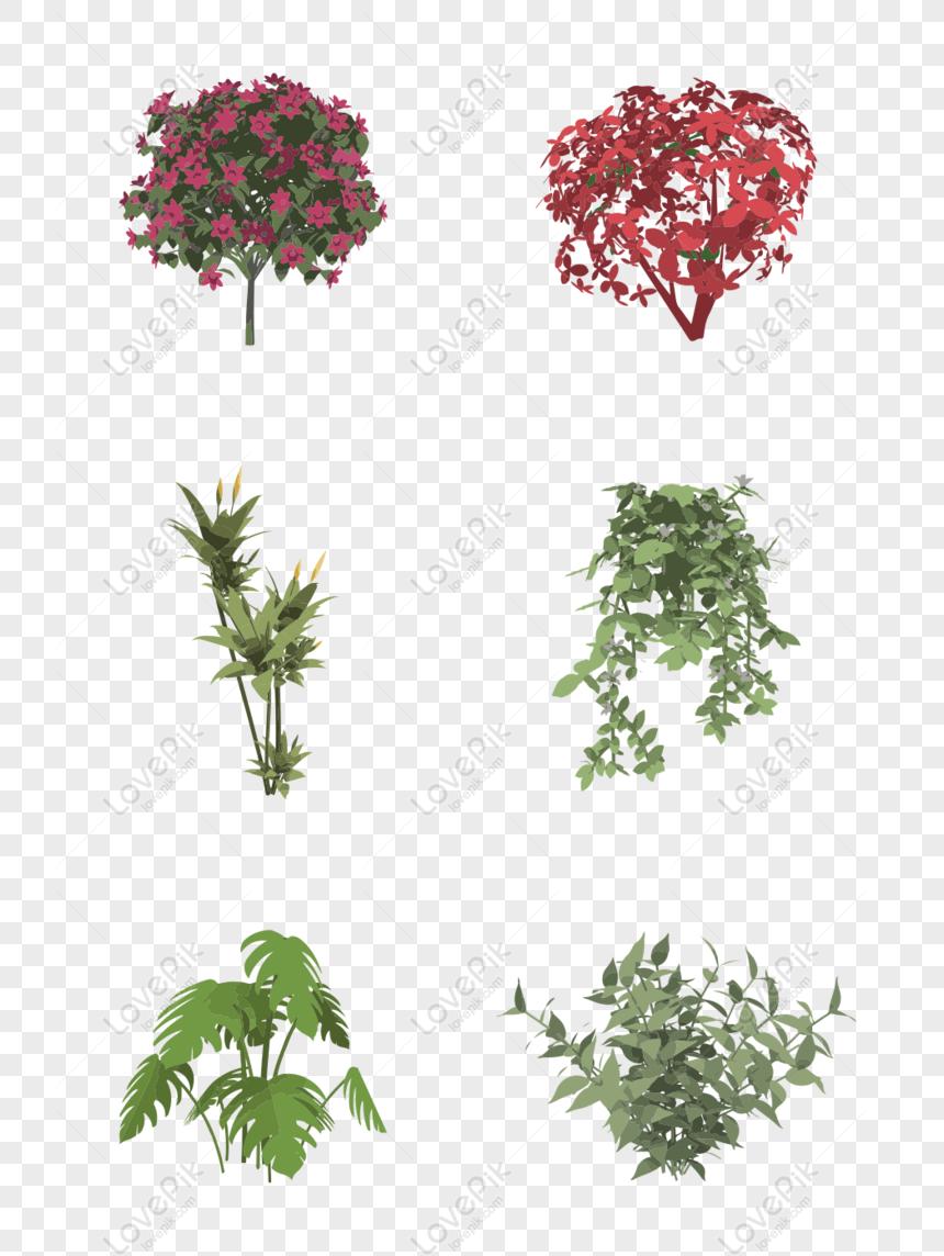 Immagini Piante E Fiori libero elementi di cespugli di piante verdi piante e fiori