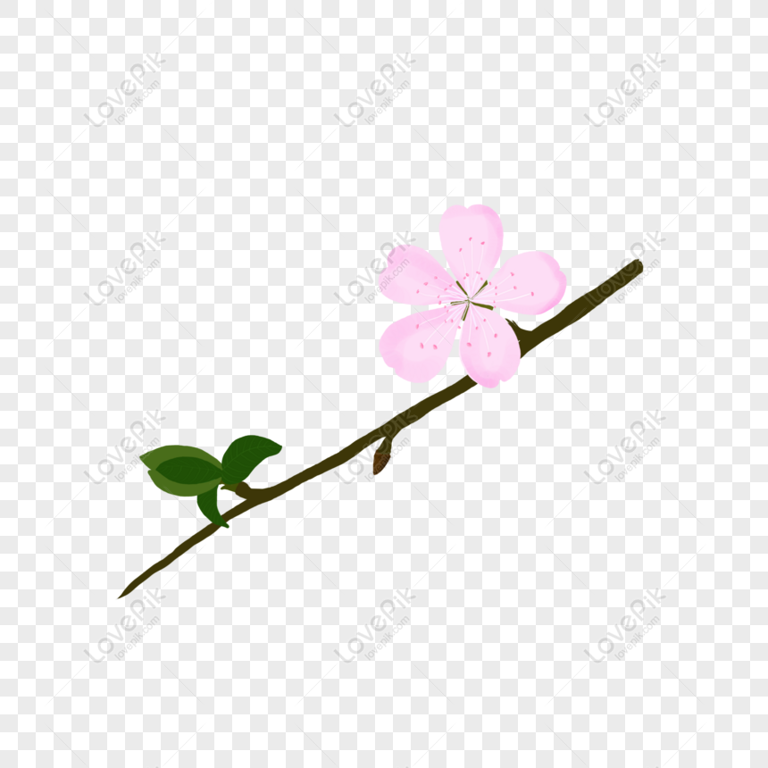hand painted pink peach blossoms for commercial elements png