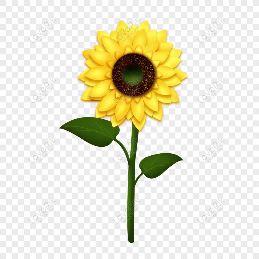 Gratis Bunga Matahari Musim Gugur Bunga Kuning Segar Pola Dekoratif Kar Png Psd Unduhan Gambar Ukuran 2000 2000px Id 832251936 Lovepik