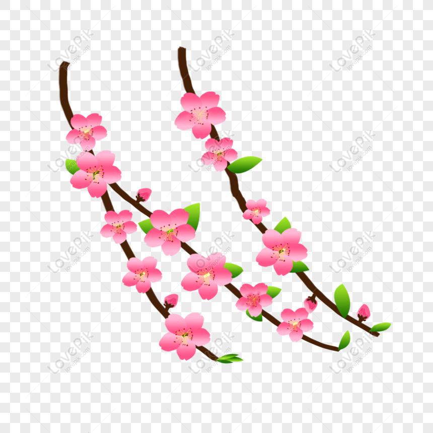 peach blossom hand drawn vector peach blossom element peach leaf png
