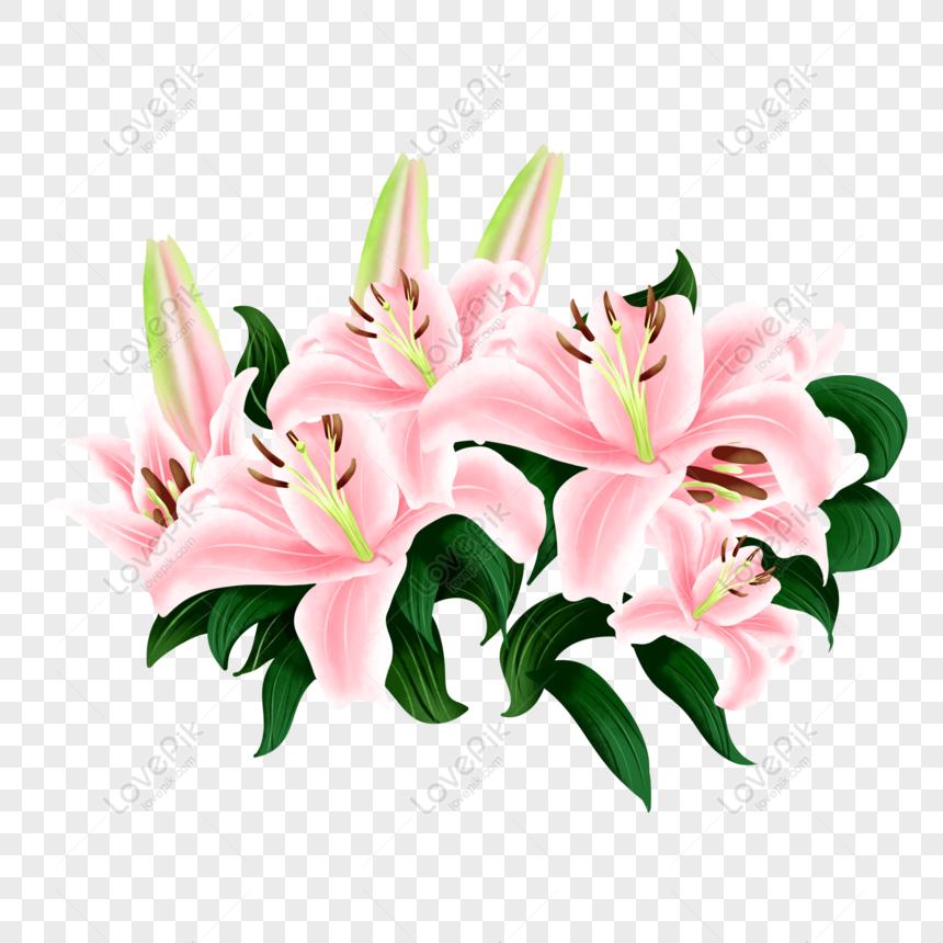 Percuma Bunga Komersil Yang Dilukis Bunga Lily Bunga Elegan