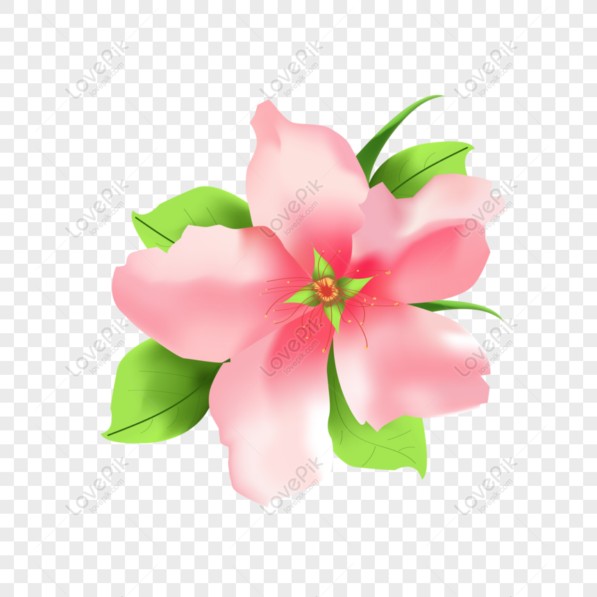 hand painted beautiful fresh peach 3 commercial elements png