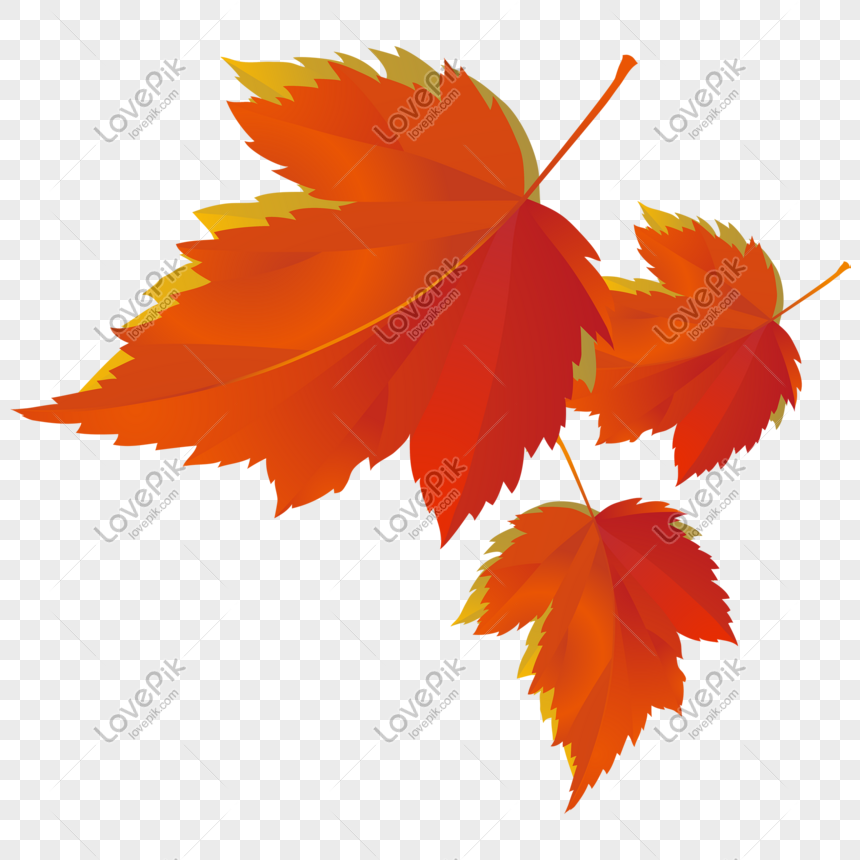 Simple Red Maple Leaf Free Png Transparent Layer Material Png Image Picture Free Download 727620288 Lovepik Com