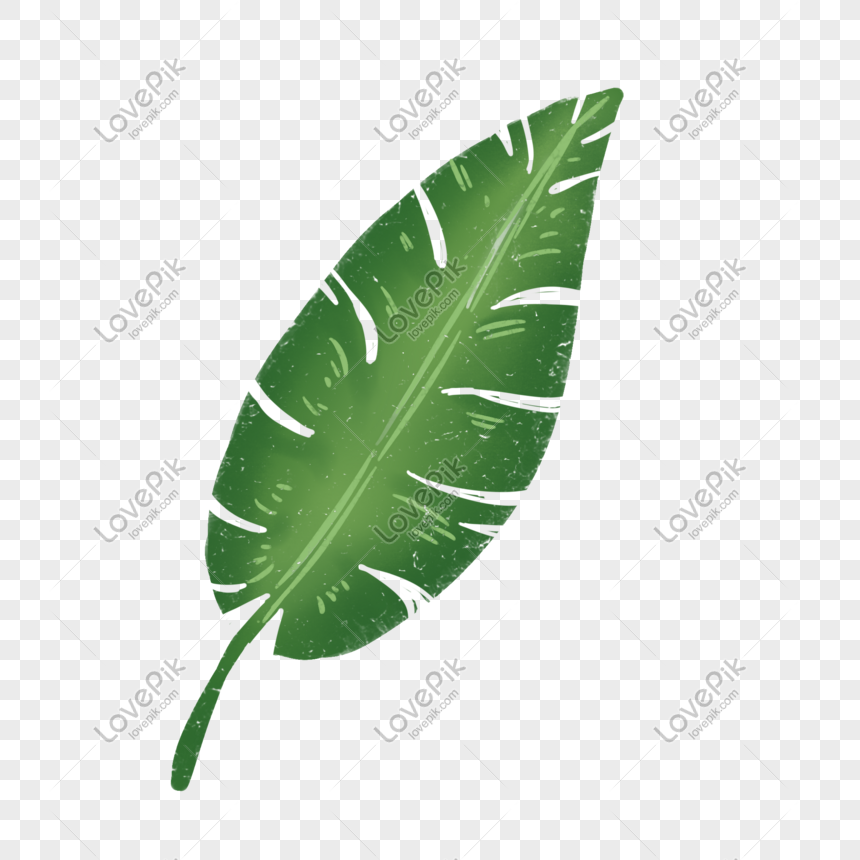 Plant Banana Leaf Cartoon Hand Drawn Png Element Png Image Picture Free Download 728339736 Lovepik Com It creates a festive mood and gives joy to you and your loved ones. plant banana leaf cartoon hand drawn