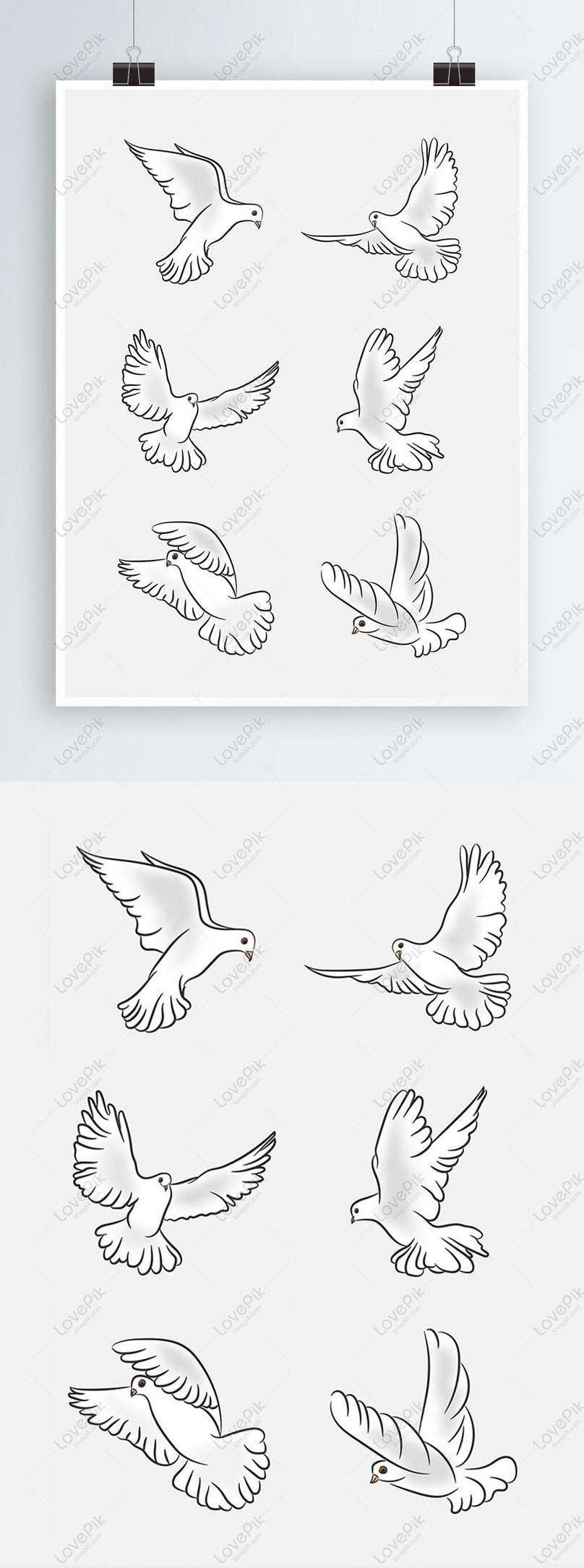 حمامة السلام رسم