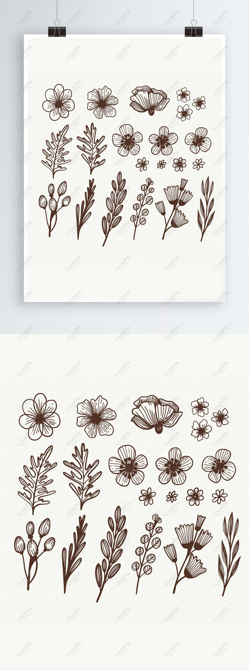 Elemen Bunga A Sketsa Yang Digambar Tangan Gambar Unduh
