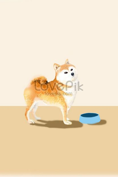 cute animal cute pet small shiba inu png