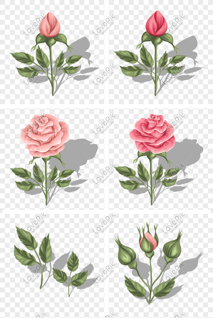 Vector Beautiful Rose Flower Bud Png Image Picture Free