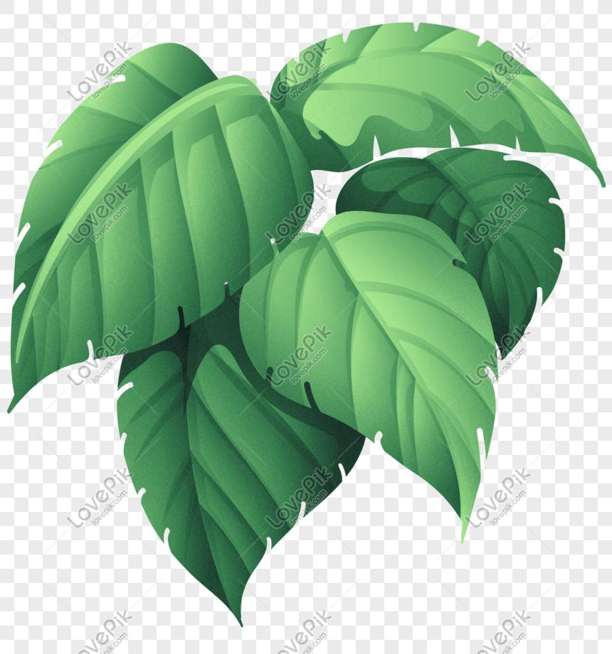 Groene Plant Groot Blad Tropisch Regenwoud Gratis