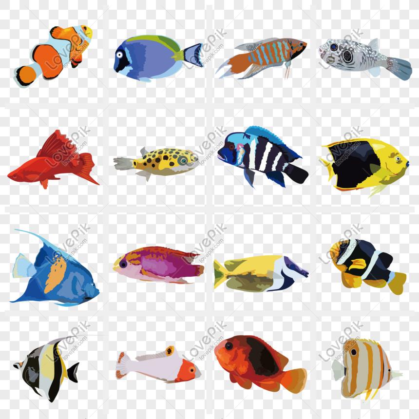 Ilustrasi Dekoratif Ikan Tropis Yang Digambar Tangan Gambar Unduh