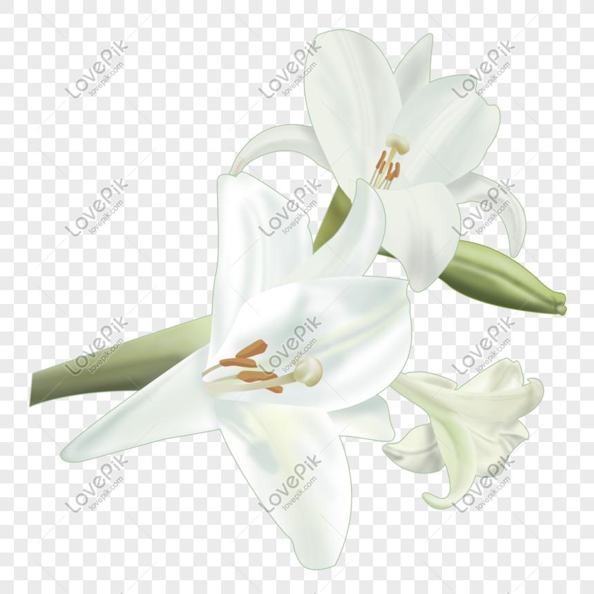 Bunga Bakung Yang Indah Di Musim Semi Png Grafik Gambar Unduh Gratis Lovepik