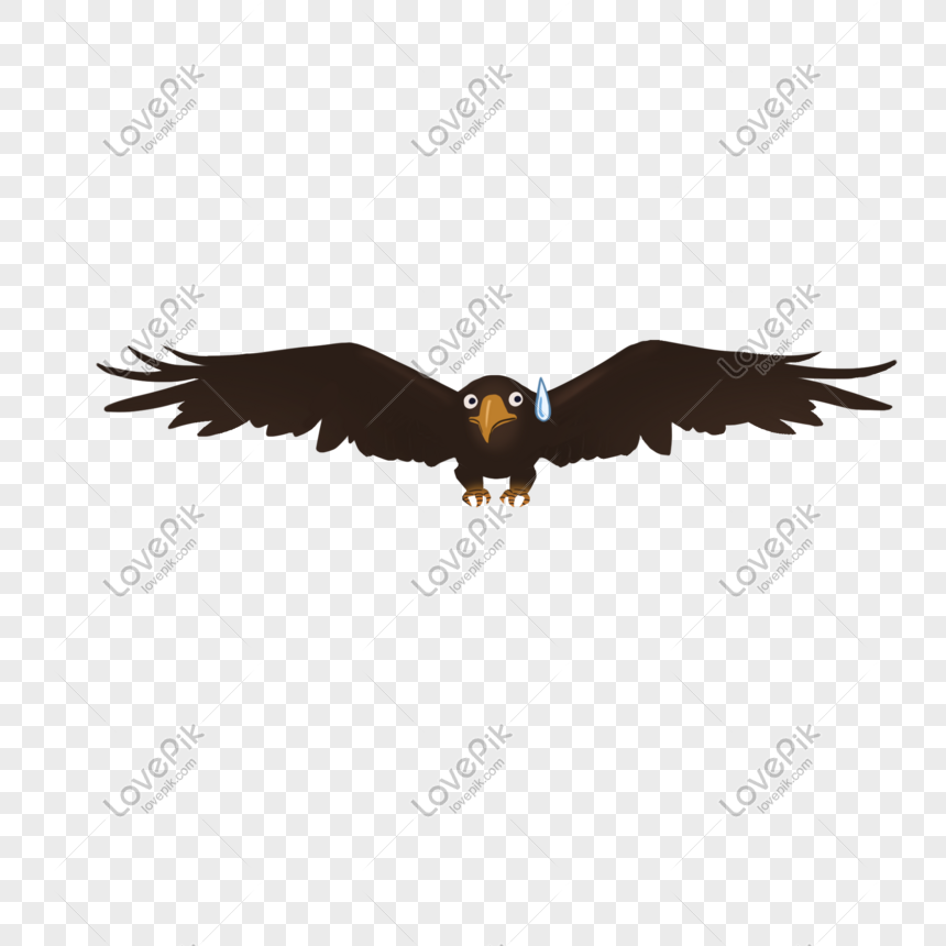 21+ Gambar Burung Elang Versi Kartun - Gambar Kartun Mu