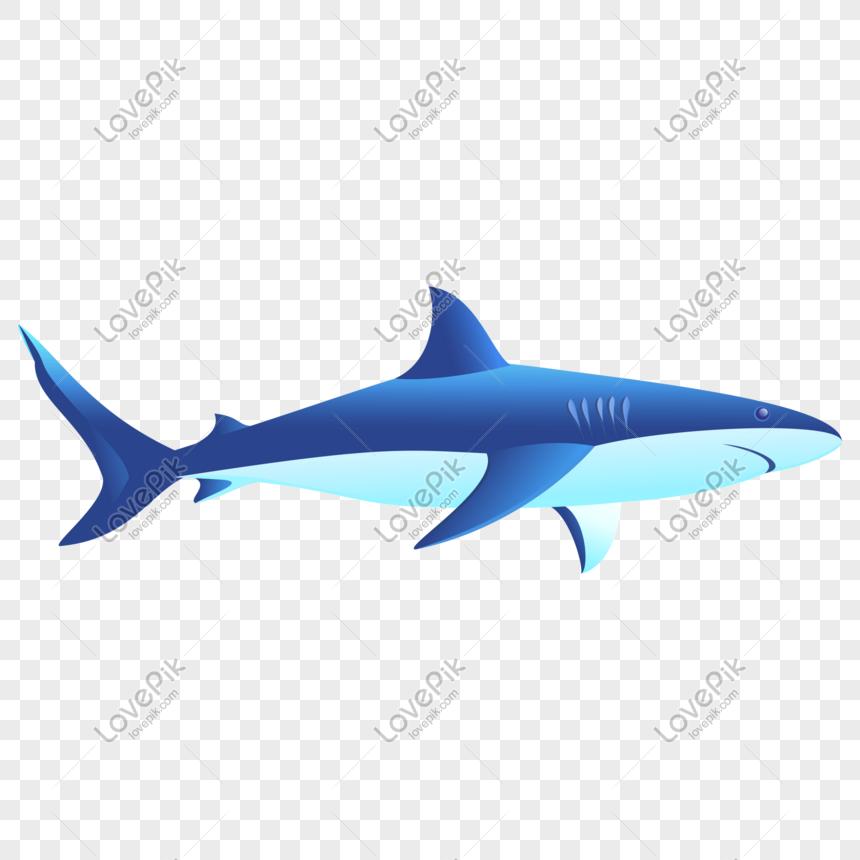 630 Gambar Ikan Hiu Kartun Png HD Terbaru