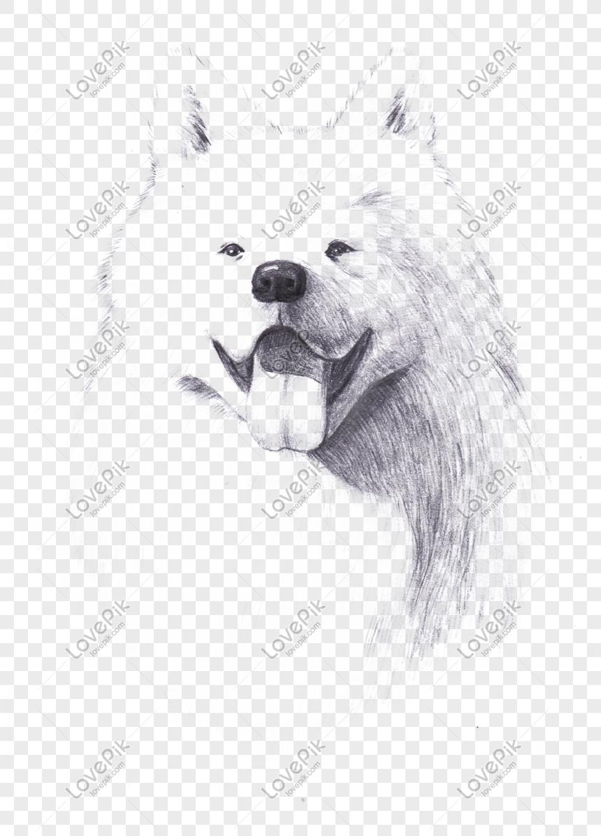 Anjing Lakaran Tangan Tangan Samoyed Png Gambar Unduh