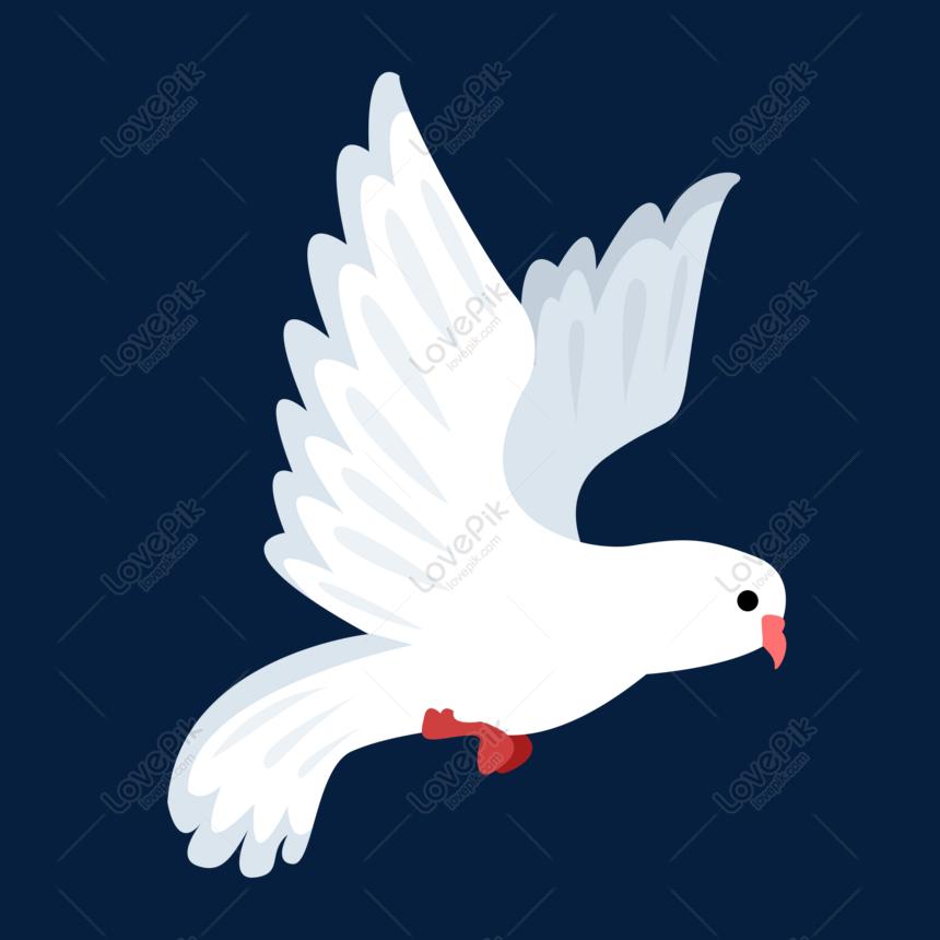 940+  Gambar Burung Merpati Yg Indah  Terbaru Gratis