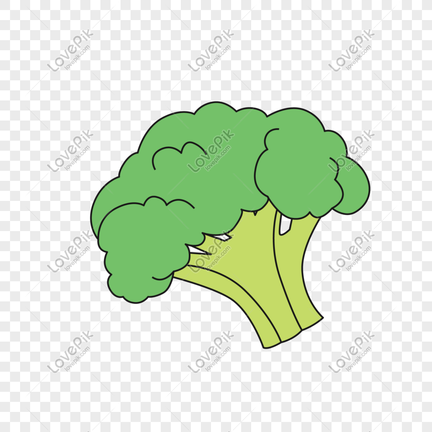 hand drawn broccoli vector png png image picture free download 610824292 lovepik com hand drawn broccoli vector png png