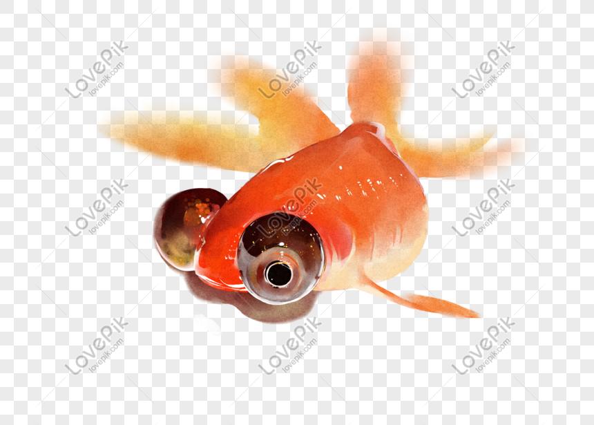 Unduh 88 Koleksi Gambar Ikan Mata Besar HD Gratis