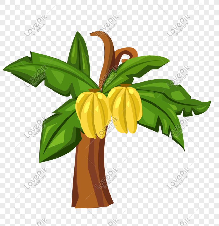 cartoon hand drawn banana tree vector png image picture free download 611012913 lovepik com cartoon hand drawn banana tree vector