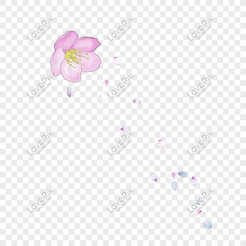 Desain Ilustrasi Bunga Sakura Yang Jatuh Png Grafik Gambar Unduh