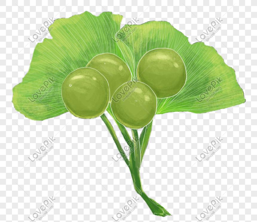 Propriétés Ginkgo Biloba - 4 plantes pour la concentration et la mémoire | Le blog d ...
