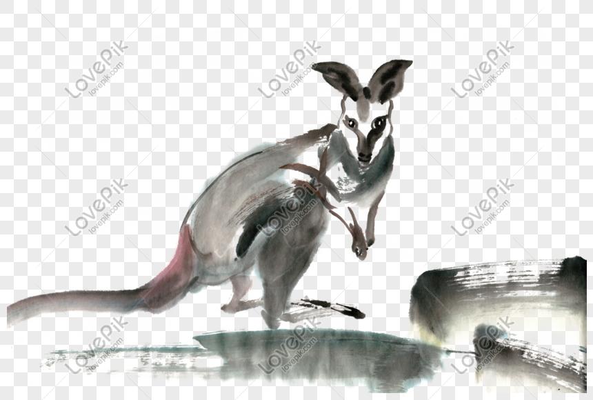 Kanguru Hayvan Murekkep Boya Png Icermeyen Malzeme Resim Grafik