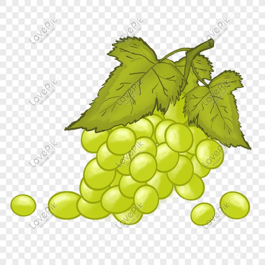 mewarnai gambar buah anggur semangka kartun molde emilia 4 auto electrical wiring