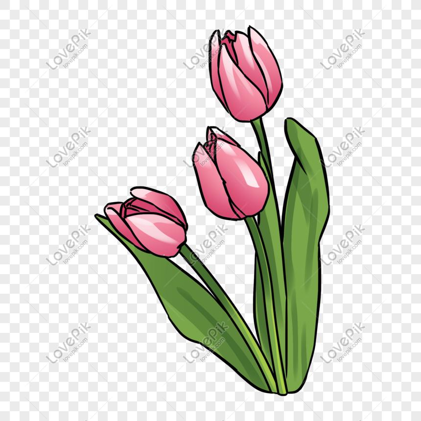 Download 80 Gambar Bunga Tulip Png Paling Keren