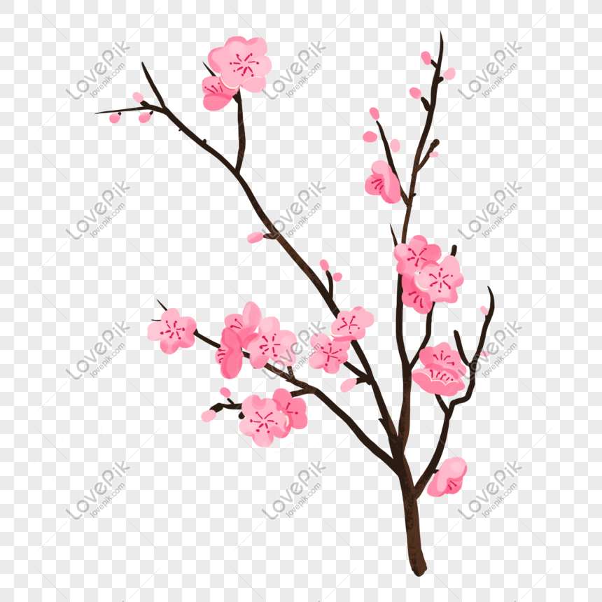 Plum Bunga Merah Jambu Bunga Ilustrasi Gambar Unduh Gratis Imej
