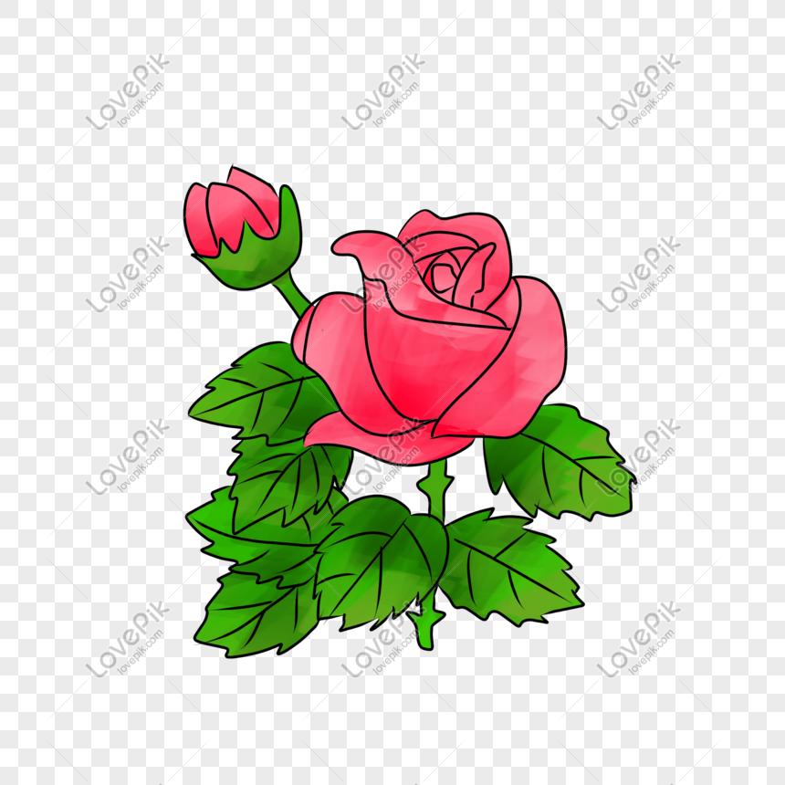 Gambar Ilustrasi Tanaman Bunga Ilustrasi Tanaman Bunga Mawar Png Grafik Gambar Unduh Gratis Lovepik