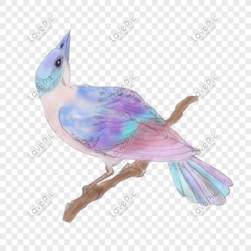 Dibujos Animados Pintados A Mano Estilo Chino Acuarela Pájaro Li